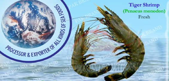 Buy TIGER SHRIMP (Penaeus monodon)