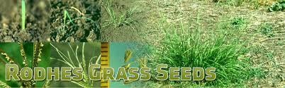 Buy Rhodes Grass Seed