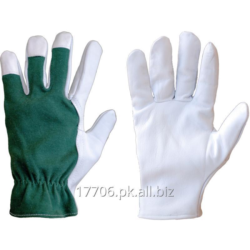 Buy Goatskin Leather Gloves /