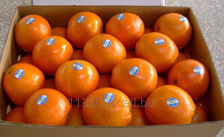Buy Orange Fruit