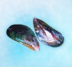 Green mussal
