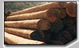 Logs, Indonesian Balau Round