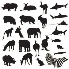 Animals for Zoo