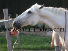 Himalayan Natural Rock Salt Lick for Horse Licking