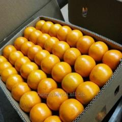 Citrus, Mandarin, Kinnow, Orange from Pakistan