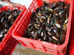 Green Mussels