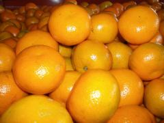 Fresh Waxed Citrus fruit From Pakistan
