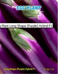 Egg Plant Long Shape (Purple) Hybrid F1