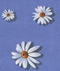Byuspo Fabrics (wholesale)