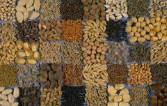 Spices,pulses,sesame seeds