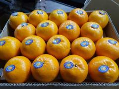 Kinnow mandarin.Fresh fruits.