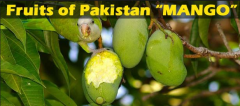 Fresh fruits from Pakistan.