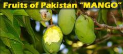Фрукты свежие из Пакистана, манго