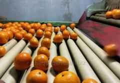 Delicious tangerines Best mandarin orange from