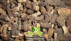 Gucchi / Morchella esculenta / Morel Mushrooms