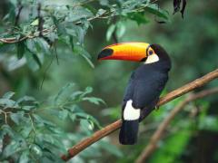 Love birds coctail parrots