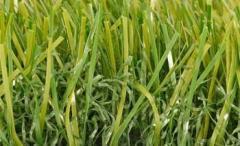 Indus Grass