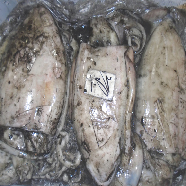frozen_cuttlefish_size_100150_grade_a_for_china
