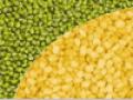 Green Moong Bean & Yellow Moong Daal