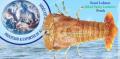 SAND LOBSTER (Mud Spiny Lobster)