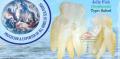 Banana Jelly Fish