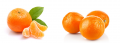 Mandarins (Kinnow)