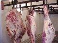 Halal Frozen Beef Quarters