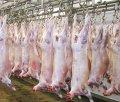 Halal Frozen Lamb