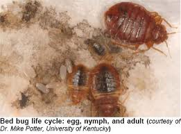 Order Bed bugs control