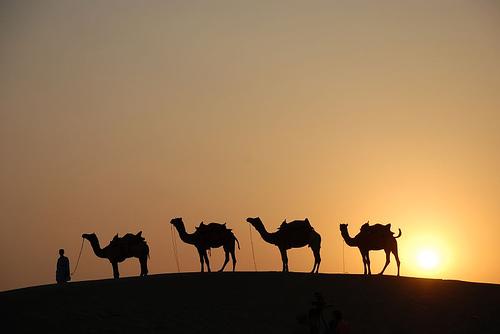 Order Cholistan desert camel safari, Pakistan