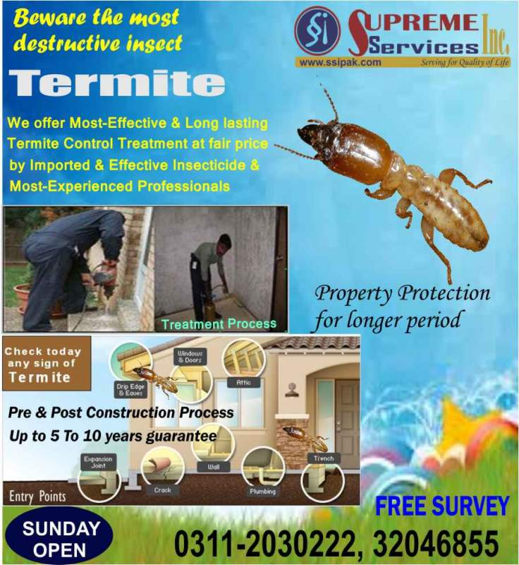 Order Termite Control & Proofing Services