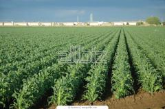 Consulations on biological farming